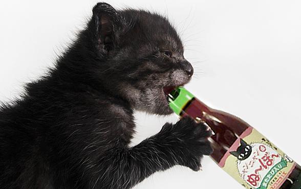 crean vino para gatos