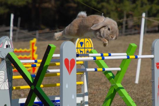 competiciones conejos