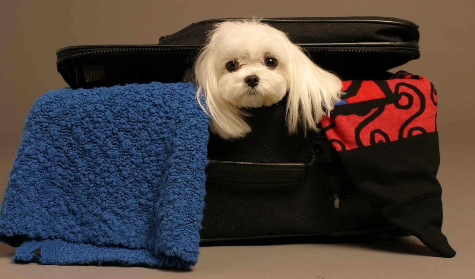 Viajes Mascotas